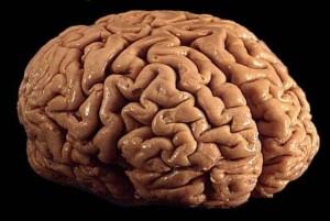 funzim-brain-640x42925